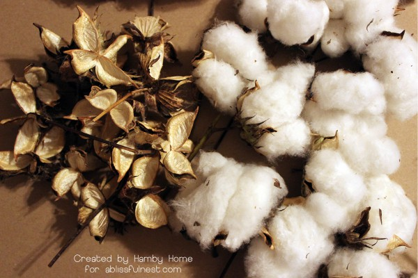 Cotton_Prep
